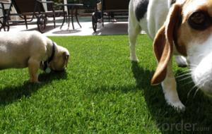 Backyard Garden Grass Artificial Turf Grass for Pet