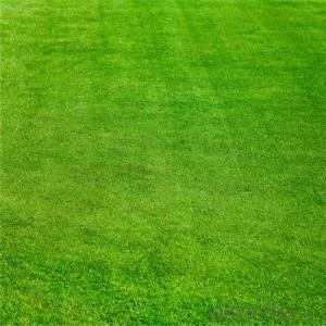 Natural artificial turf used on golf courses