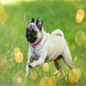 Artificial Grass For Pet Or Family Garden