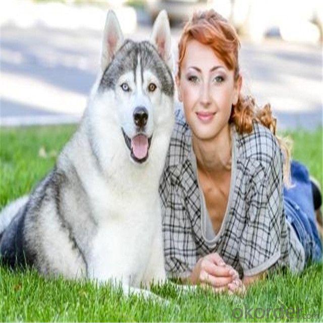 Artificial Grass For Pet/High Quality