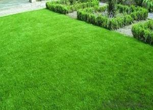 Artificial grass for house garden decoration