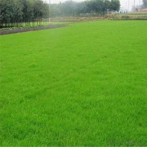 Kindergarten Sport Course Artificial  Grass